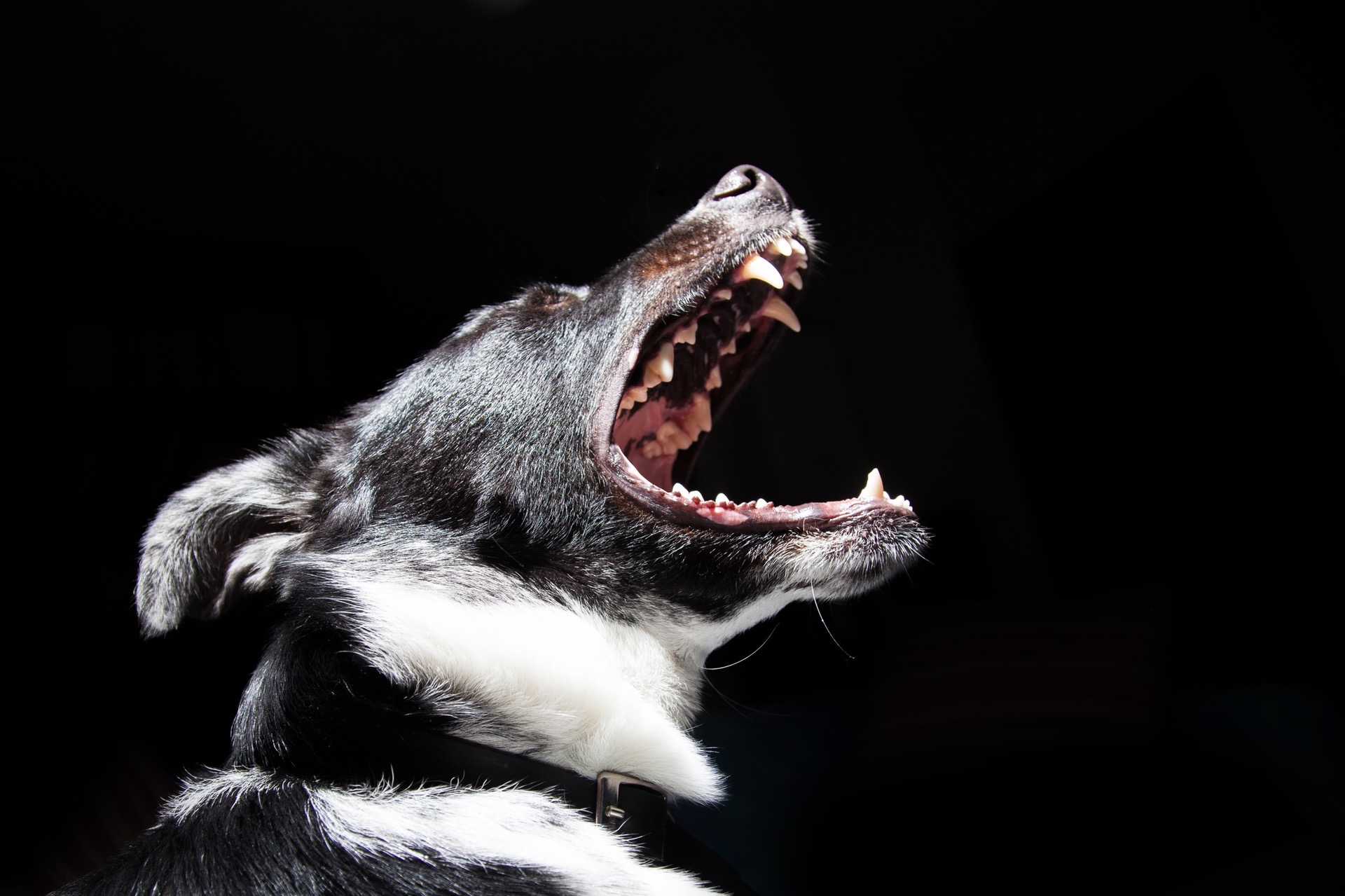 Is The Dog Or The Owner Responsible For A Dog Attack?