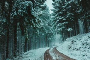 road with snow & trees