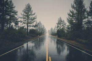 trees alongside wet road